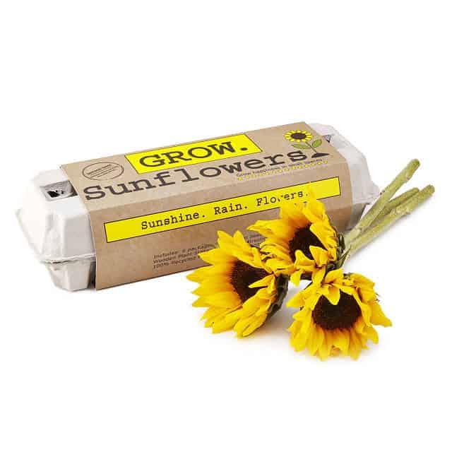 birthday gift - sunflower garden grow kit